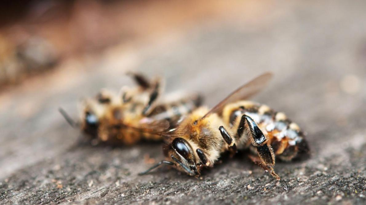 Déclin des abeilles. Une menace pour la sécurité alimentaire mondiale